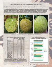 Breadfruit-Nutrition-Fact-Sheet-200px