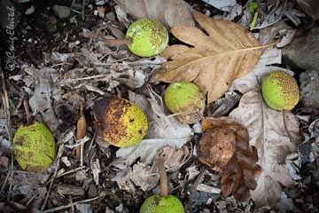 Is your breadfruit going to waste, and if so, would you like to donate it to people who want and need it?