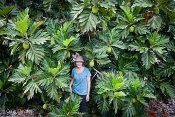 Cindy Walsh of Kona Ulu nursery in her 7-year-old orchard of 'Ma'afala' breadfruit trees.