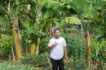 A garden of tropical food plants (sweet potato, cassava, banana, breadfruit) requires less weeding and replanting, because of the long-lived species.